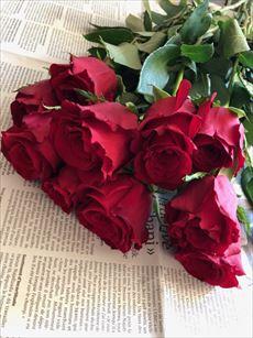 rose_R.jpg