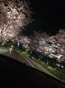 sakura8_R.jpg